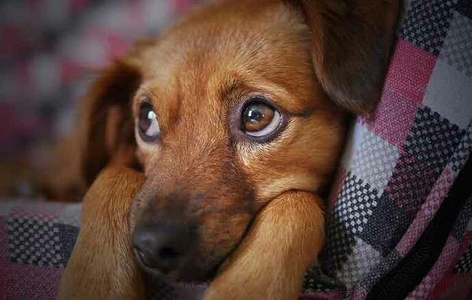 Donan comida envenenada a refugios para perros