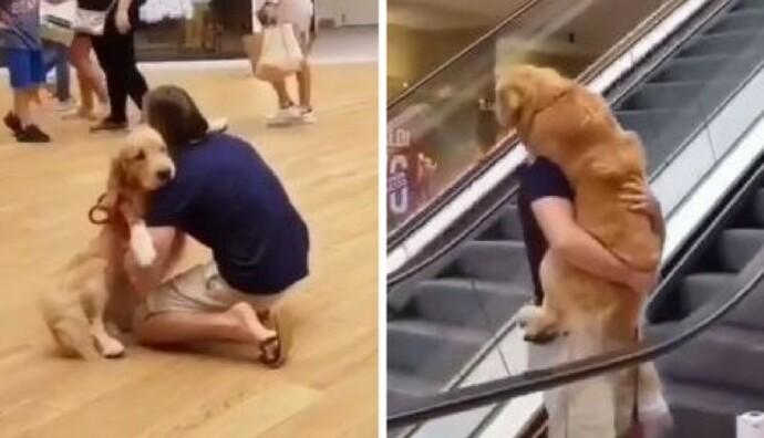 Resultado de imagen de perro cargado como bebe