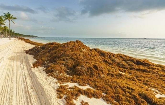 Limpio Quintana Roo ante poca aproximación de sargazo