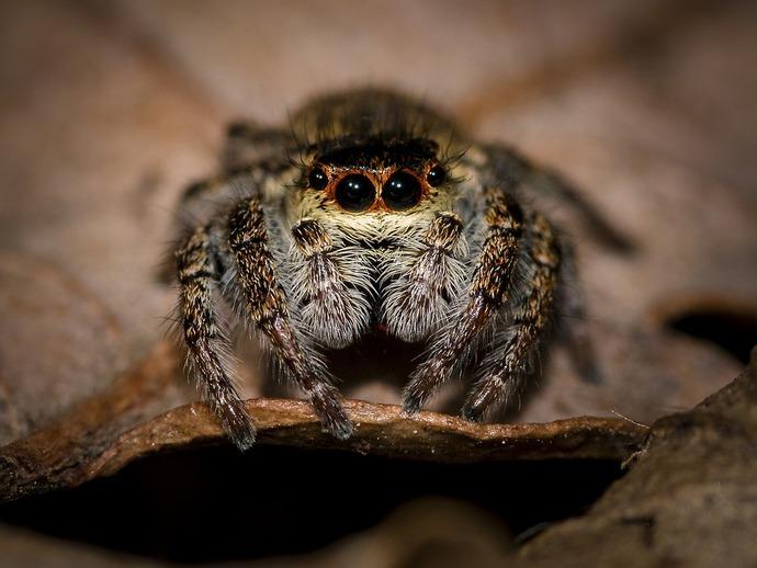 Despierta con dolor de cabeza y descubre una araña dentro de su oído