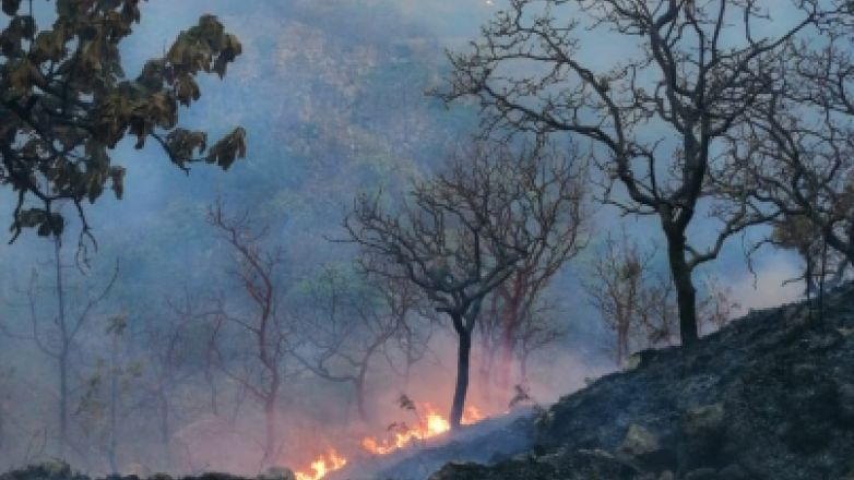 Participan 308 personas en combate a incendio forestal
