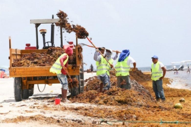Recolectan más de seis mil toneladas de sargazo