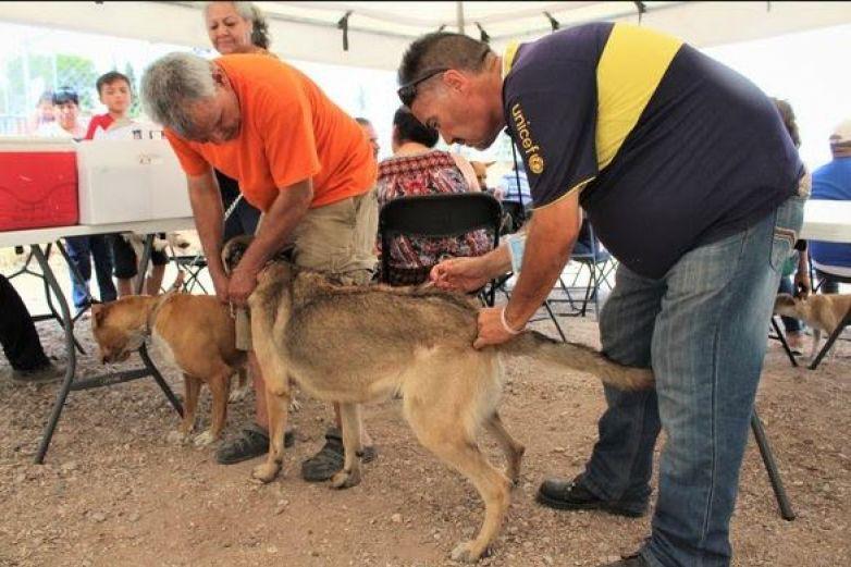 BrindaDIF 508 servicios a mascotas
