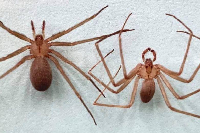 Con el calor llegan a los hogares arañas y garrapatas