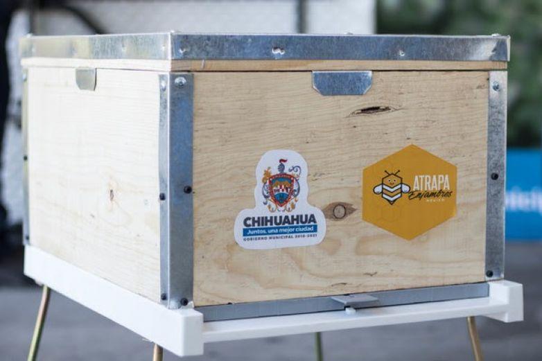 Van 706 casos de abejas atendidos en el último año