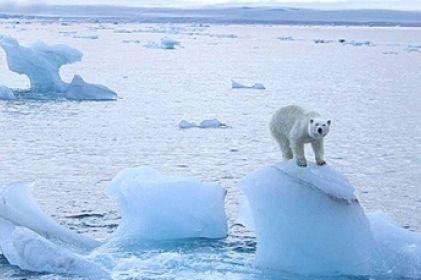 Hielo marino en el Ártico desaparecería en 25 años, sugiere estudio