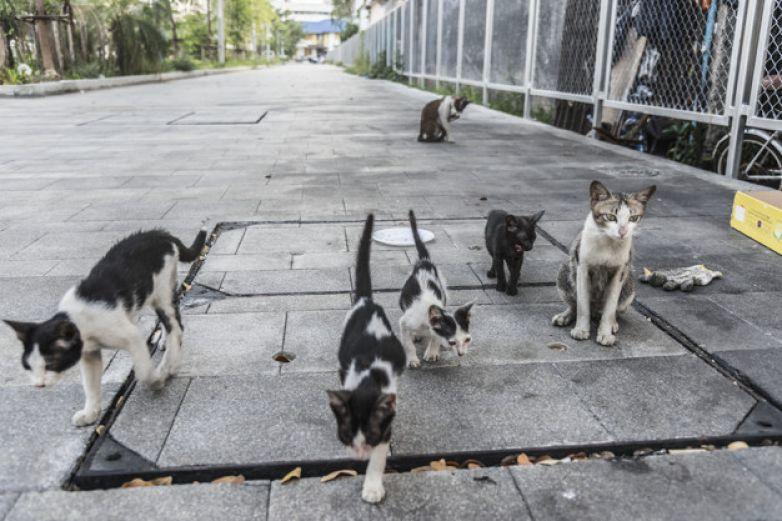 Acusan de matanza de gatos en Cuba