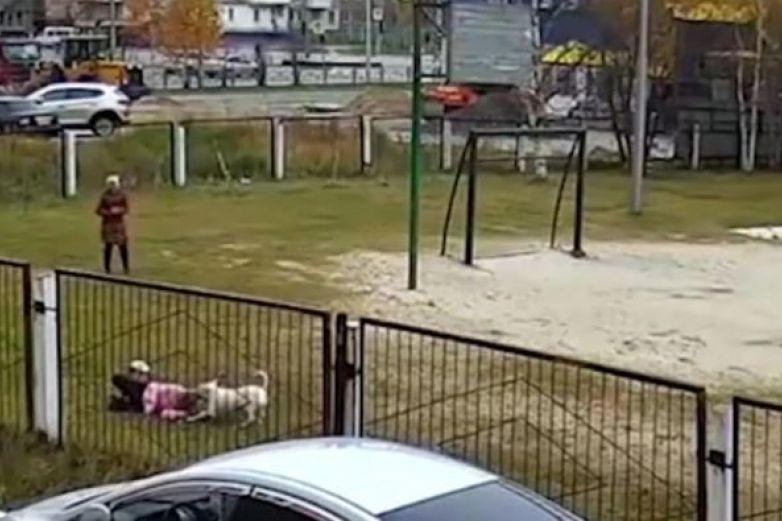 Perro ataca a un grupo de niños en escuela