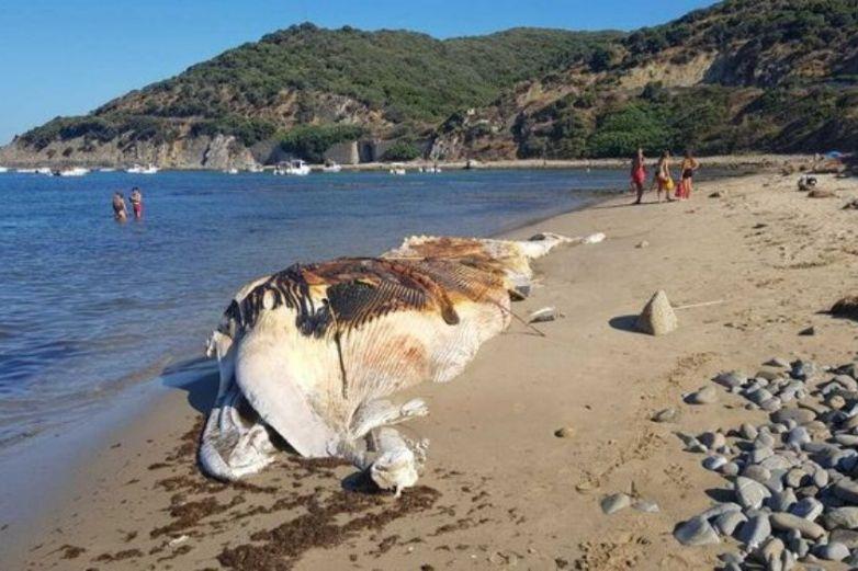 Captan a ballena muerta en medio el mar y a punto de explotar