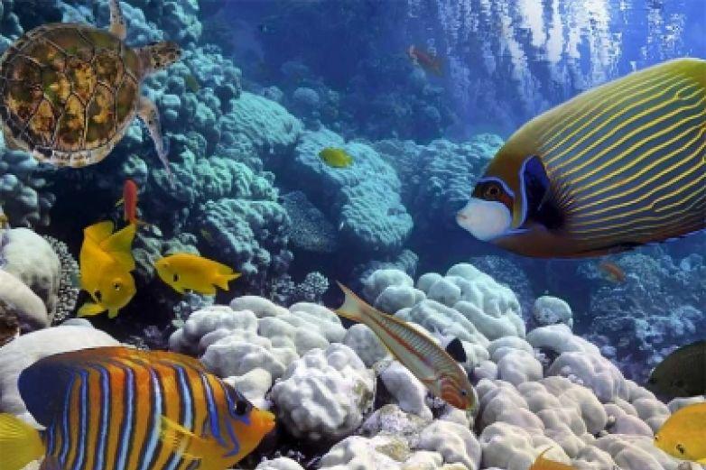 Cambio climático reducirá oxígeno de los océanos