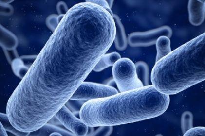 Mueren 7 por bacteria carnívora en California