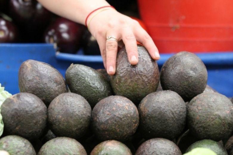 Aguacate alcanza hasta los 80 pesos por kilo en varias zonas del país
