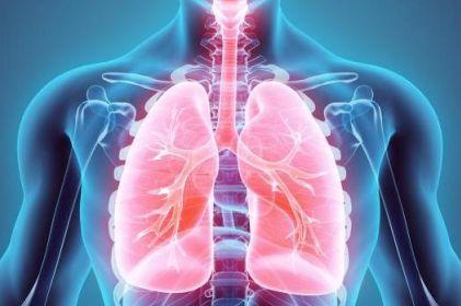 Crean modelo celular de pulmón humano