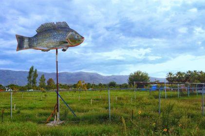 La acuicultura emerge en Aldama, Chihuahua