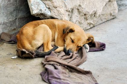 Resguarda en tu hogar a un perro callejero este invierno