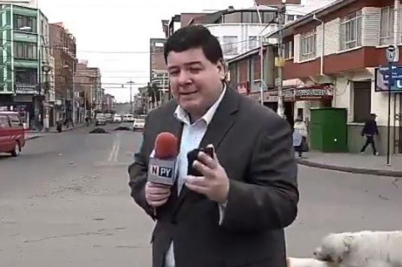 Perros en celo arruinan por completo el reportaje a un reportero