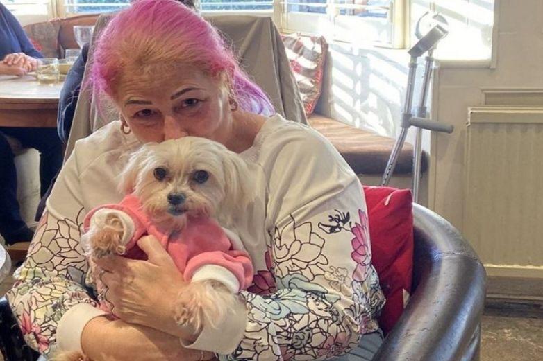 Phoebe, la perrita con cáncer terminal que llegó a su 'última cena'