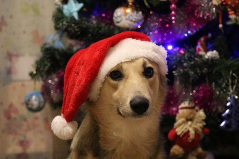 Flor de Nochebuena puede poner en riesgo a tu mascota