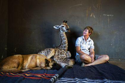 Muere 'Jazz', jirafa adoptada por perrito