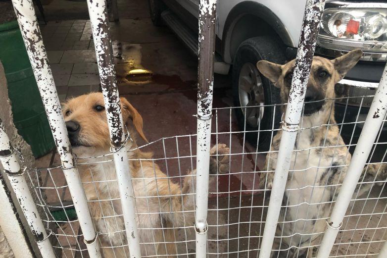 Perros, fieles guardianes de los talleres mecánicos de Juárez