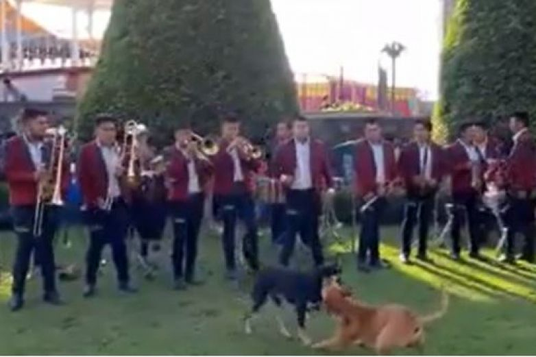 Banda toca 'The Final Countdown' en pelea de perros