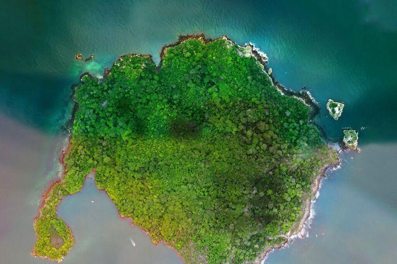 Decide Panamáproteger isla en el Pacífico, hábitat de aves