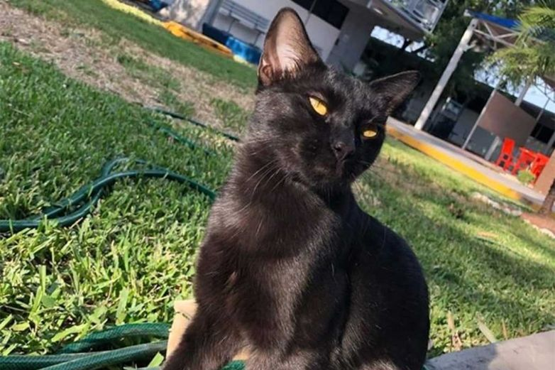 Esta es la famosa mascota del Cbtis, un gato negro llamado 'Michi'
