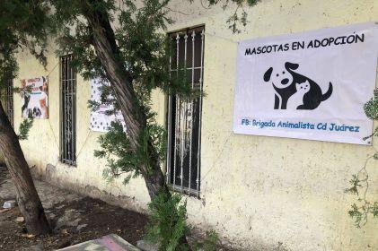 Juarense rescata perros abandonados y les da una segunda oportunidad