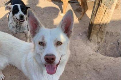 Piden 'una patita de ayuda' para animales rescatados