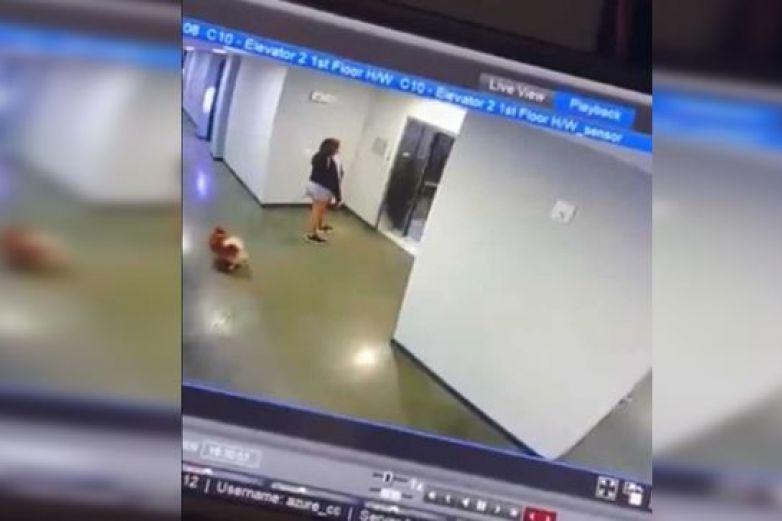 Súperheroe salva de la muerte milagrosamente a un perrito