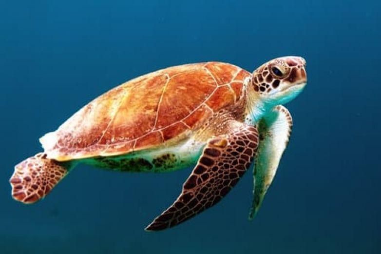 Mueren 351 tortugas en 6 meses en Baja California Sur