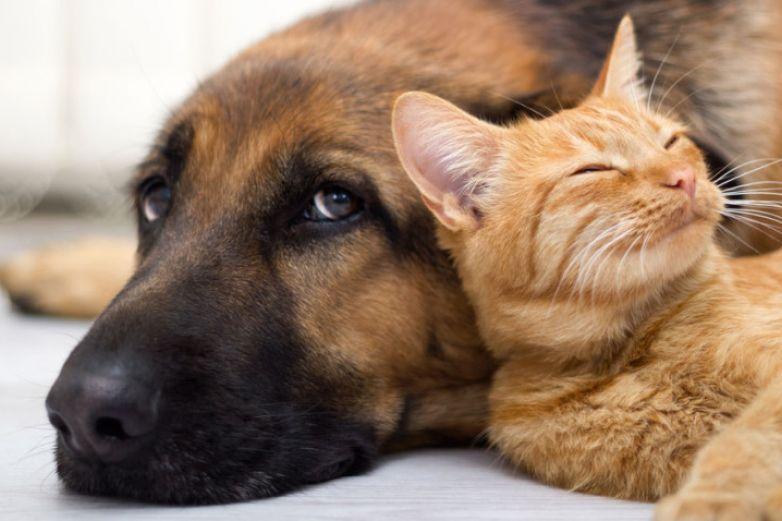 Al igual que los humanos, las mascotas también padecen de diabetes