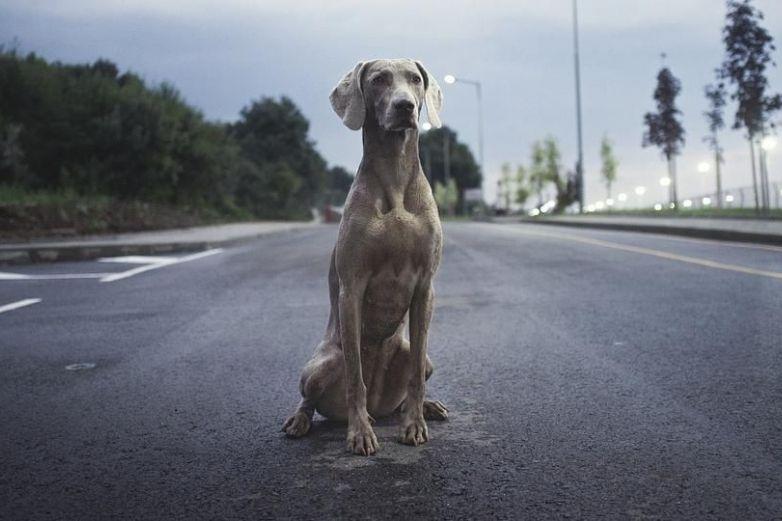 Hombre realiza extremo rescate para salvar la vida de un perro en autopista