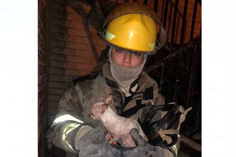 Rescatan bomberos a perro chihuahua de incendio