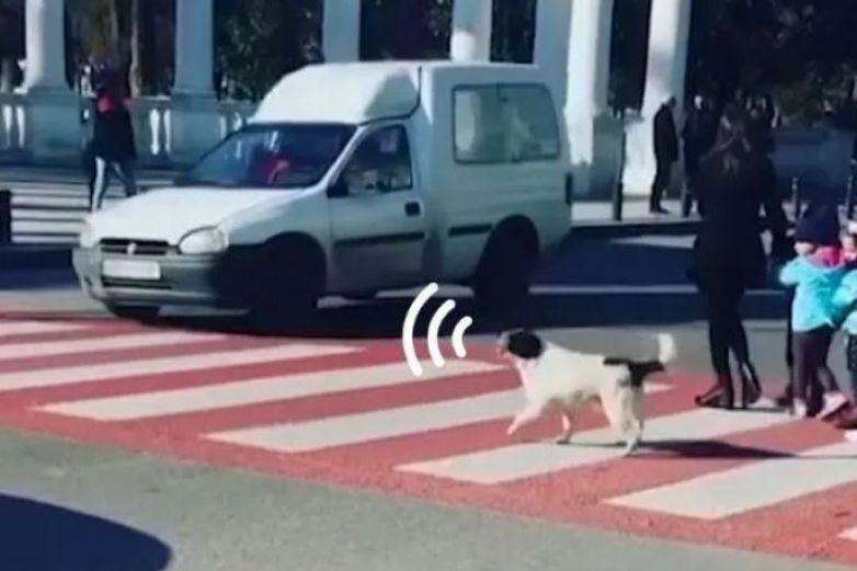 Perro callejero ayuda a niños a pasar por cruce peatonal