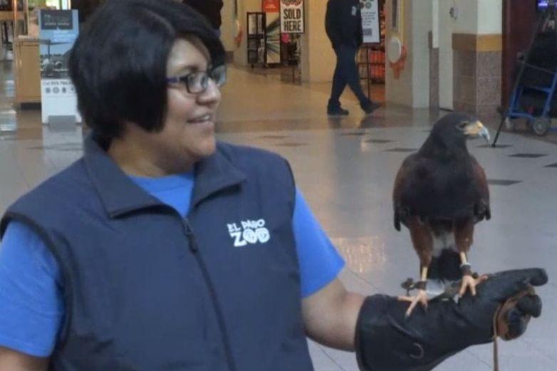 Animales exóticos reciben a viajeros en el aeropuerto de El Paso