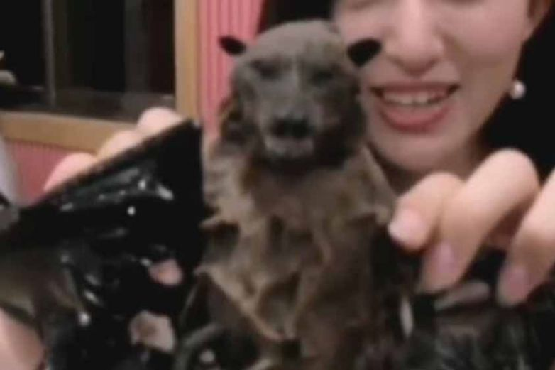 La verdad sobre clip de joven que 'devora' un murciélago