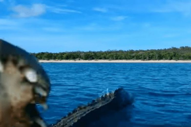 Cocodrilo salta al agua y ataca a un dron