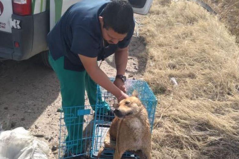 Rescatan a perro que cayó en canal