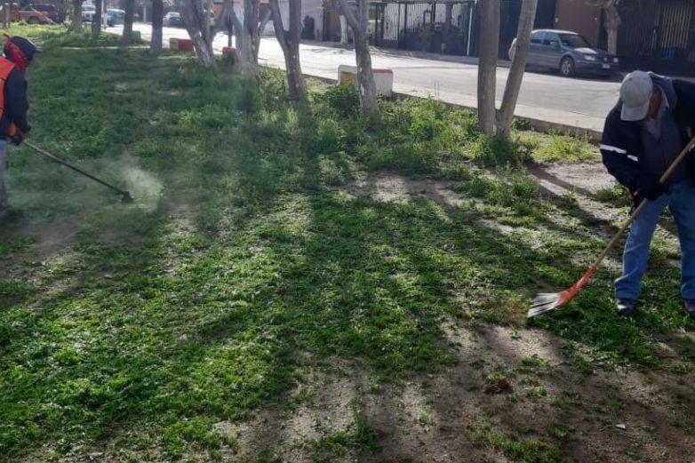 Limpian áreas verdes en más de 70 colonias