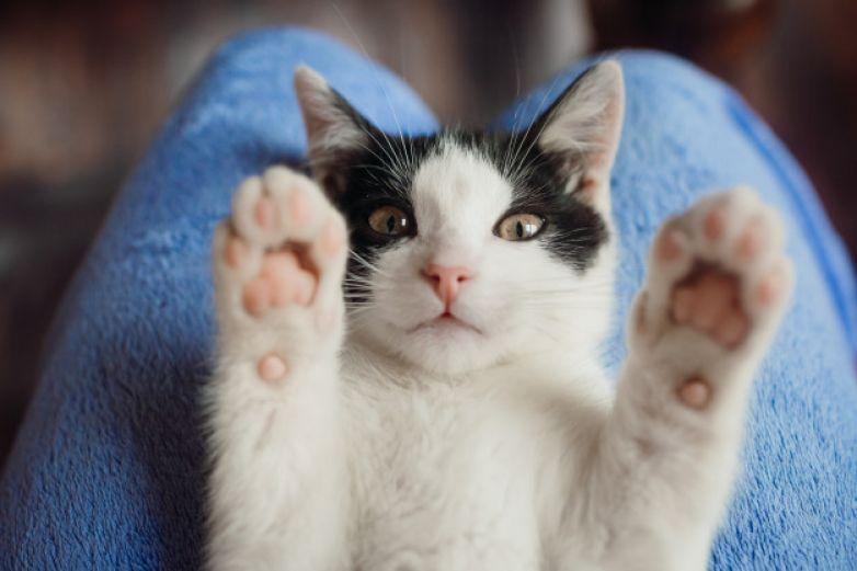 ¡Felicita a tu 'michi'! Inicia la semana del gato