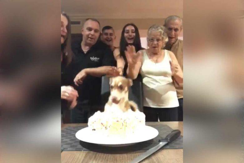 Familia le hace fiesta sorpresa a su perrito; su festejo te hará el día