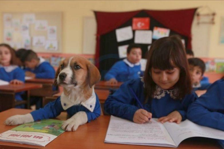 Rescatan a cachorrito y ahora es el mejor alumno de la escuela