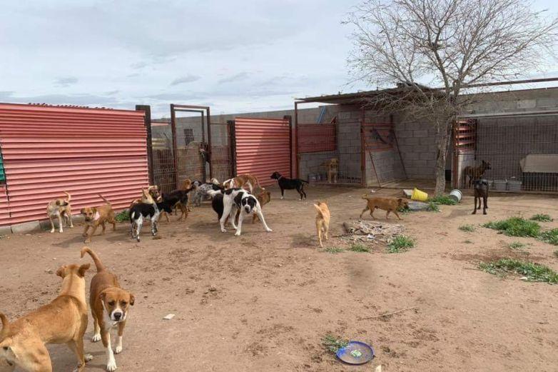 Solicitan apoyo de la comunidad; alimento y el agua escasea para los perritos