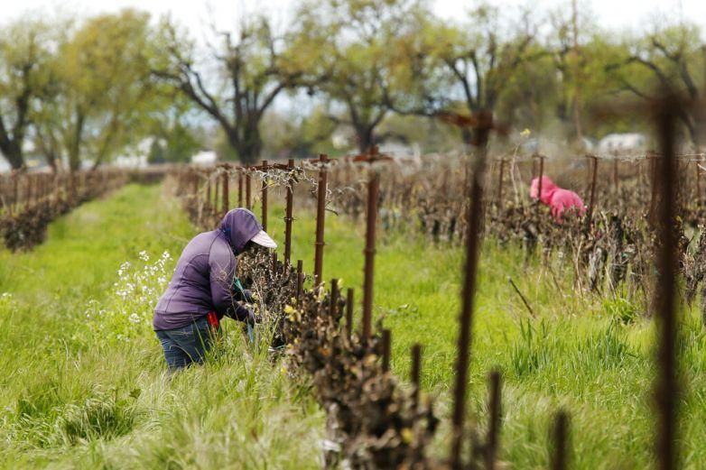 Permiten que trabajadores agrícolas crucen frontera a EU