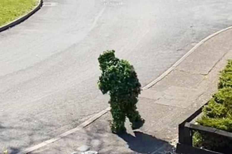 Hombre se disfraza de arbusto para burlar la cuarentena por coronavirus