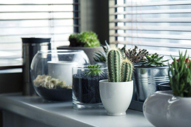 ¿Olvidas regar las plantitas? identifica cuales no requieren de agua constante