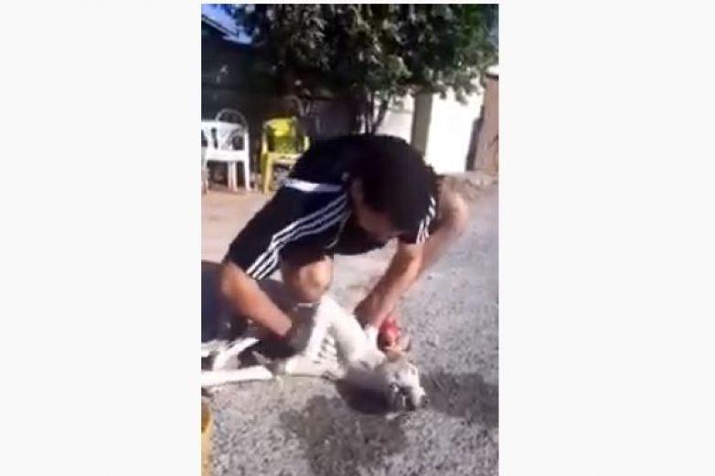 Joven practica RCP a perro callejero y salva su vida