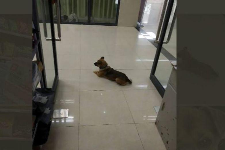 Perro espera a su dueño fallecido por coronavirus en hospital