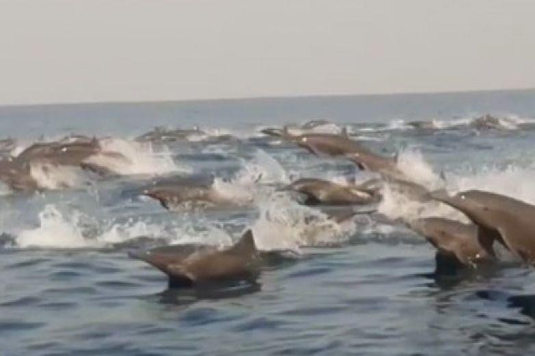 ¡Gracias cuarentena! Cientos de delfines se dejan ver en costas de Oaxaca